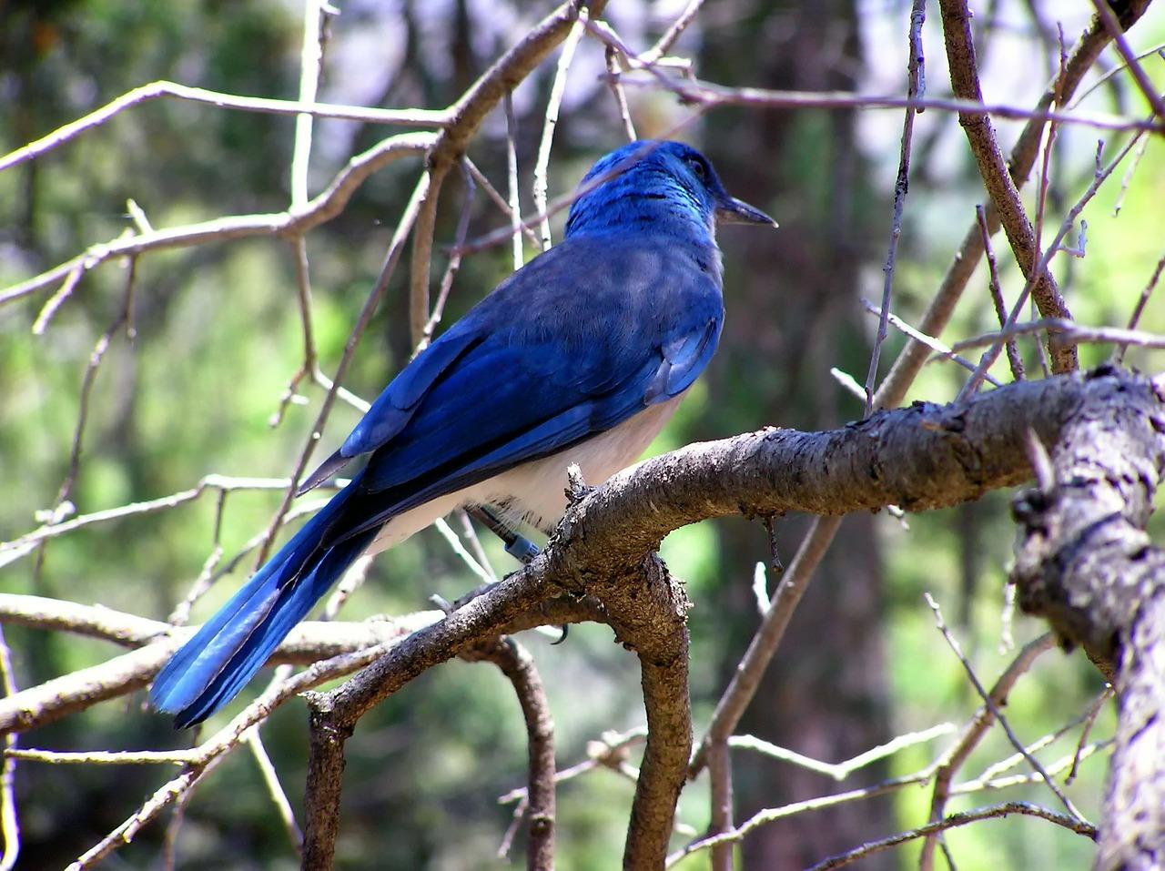 青い鳥症候群の対処は難しいため、予防が大切