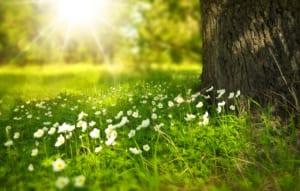 冬季うつは、日照時間が長くなっていくと少しずつ症状が治まる。